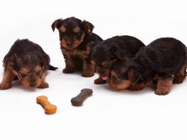 farlig, mat, for, hund