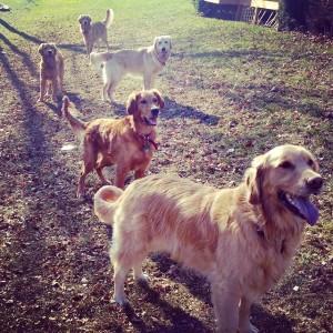 hundeforum, hunder, diskusjonsforum, forumet