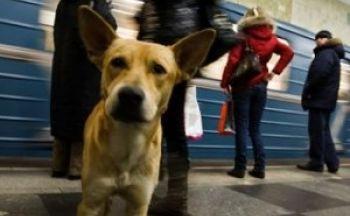 Hunder på toget