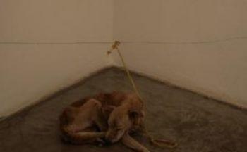Dyreplageri av hund