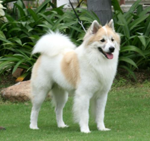 allergivennlige hunder liste